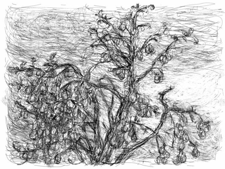 Han Klinkhamer: daily iPad drawing 5 November 2011